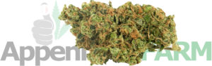 cannabis-light-Appennino-farm home