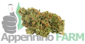 cannabis-light-Appennino-farm2
