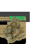 categoria-infiorescenze-cannabis-light