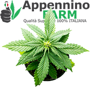 categoria1-piante-cannabis-certificate