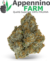 categoria2-infiorescenze-cannabis-light
