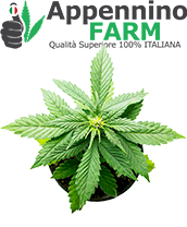 categoria2-piante-cannabis-certificate