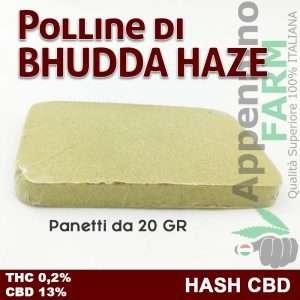 Hash CBD polline di buddha haze